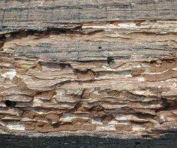 Traitement du bois protection des bois for Carbonyle traitement du bois